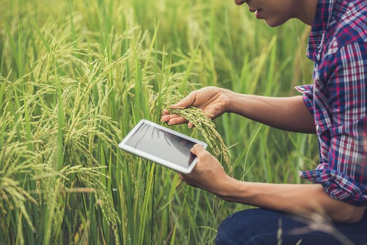 easy-farm-software-de-gestao-de-fazendas