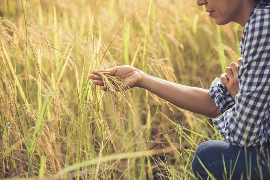 beneficios-contabilidade-rural