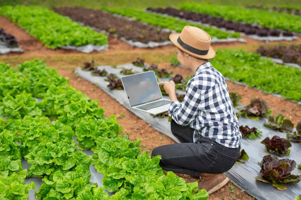indicadores-agricolas-o-que-sao