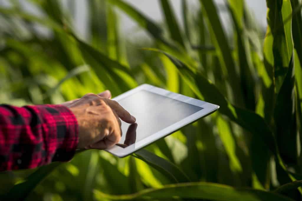 software-gestao-agricola-para-controle-pragas-da-cana-de-acucar